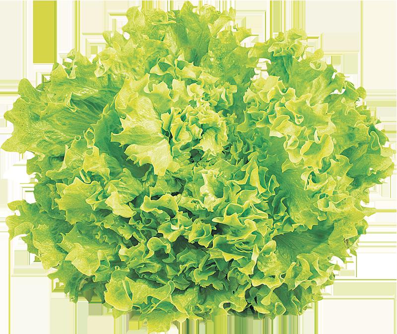 Salata kristal